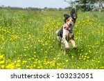 Stock photo happy dog running through a meadow with buttercups 103232051
