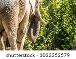 detail rear view of african... | Shutterstock . vector #1032352579