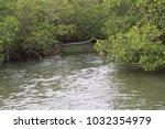 an overflowing creek rushing... | Shutterstock . vector #1032354979