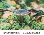 boletus mushroom in the forest... | Shutterstock . vector #1032360265