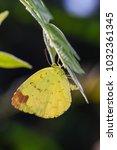 close up of female three spot... | Shutterstock . vector #1032361345