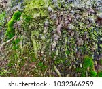 texture of big old tree roots... | Shutterstock . vector #1032366259