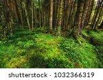 a wet pine forest in scotland ... | Shutterstock . vector #1032366319