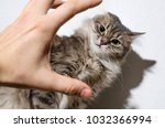 Stock photo hand attacks the cat animal violence concept 1032366994