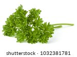 parsley leaves bunch isolated... | Shutterstock . vector #1032381781