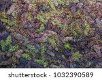 grape harvest italy | Shutterstock . vector #1032390589