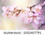 spring blossoms on the park. | Shutterstock . vector #1032407791