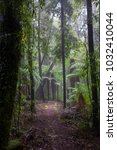 Hiking Trail In Enchanted Forest