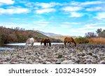 Small photo of Beautiful wild horses at Lower Salt River in Arizona.