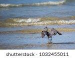 great billed heron  ardea...   Shutterstock . vector #1032455011