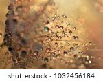 Dandelion Seed Sprinkled With...