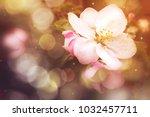 spring flower blossom with... | Shutterstock . vector #1032457711