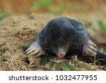 the mole on the pile | Shutterstock . vector #1032477955