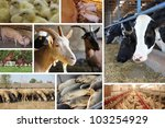 Farm Animal, cows, horses, pigs, chicken, fish, goat, sheep - stock photo