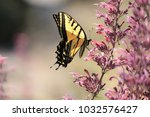 Stock photo springtime brings a plethora of wildflowers and wildlife the pollinators are busy dancing from 1032576427