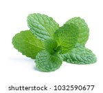 fresh raw mint leaves isolated... | Shutterstock . vector #1032590677