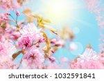 beautiful sakura flower cherry...   Shutterstock . vector #1032591841