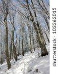 winter scene in mountain forest | Shutterstock . vector #103262015