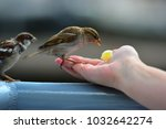 Sparrows Take Meal From The...