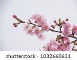 japanese cherry blossoms | Shutterstock . vector #1032660631