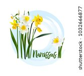 Decorative Flower Narcissus For ...