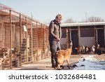Small photo of The dog is the best friend of man, a person adopts a dog from the shelter, the man takes home the dog from the animal shelter, dogs are waiting to be adopted, the brown dog is loyal