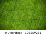 Green Grass Natural Background...