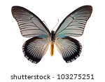 Stock photo papilio zalmoxis butterfly isolated on white 103275251