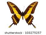 Stock photo papilio thoas king swallowtail butterfly isolated on white 103275257
