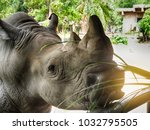 rhino is a large animal.     | Shutterstock . vector #1032795505