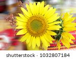 Sunflower Blooming Close Up Sunflower - Fine Art prints