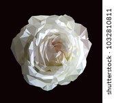 polygonal white rose on black... | Shutterstock .eps vector #1032810811