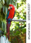 red macaw parrot sitting on a... | Shutterstock . vector #1032913237