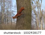 The Red Squirrel Goes Down The...