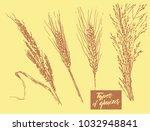 types of grains | Shutterstock .eps vector #1032948841