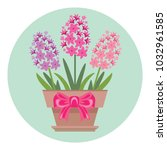 vector potted hyacinth flowers... | Shutterstock .eps vector #1032961585