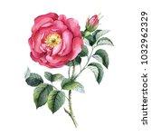 rose gallic. watercolor... | Shutterstock . vector #1032962329