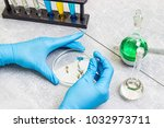 selection laboratory. breeder... | Shutterstock . vector #1032973711