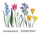 watercolor botanical... | Shutterstock . vector #1033019647