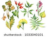 flowers and leaves hand draw... | Shutterstock . vector #1033040101