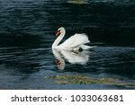 lake with a white swan  | Shutterstock . vector #1033063681