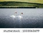 two swans in swan lake. swan... | Shutterstock . vector #1033063699