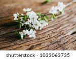 branch of blossom on wooden... | Shutterstock . vector #1033063735