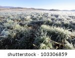 Small photo of Icicles. A field of Cock'sfoot grass encased in ice from overnight irrigation. Drakensberg,kwazulu Natal, South Africa