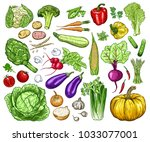 hand drawn fresh vegetables set.... | Shutterstock .eps vector #1033077001