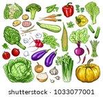 hand drawn fresh vegetables set.... | Shutterstock .eps vector #1033077001