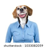 beagle head on a human model... | Shutterstock . vector #1033082059