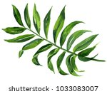 realistic tropical botanical... | Shutterstock . vector #1033083007