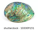 Haliotis shell - stock photo