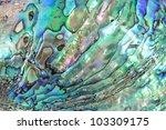 Haliotis shell detail - stock photo